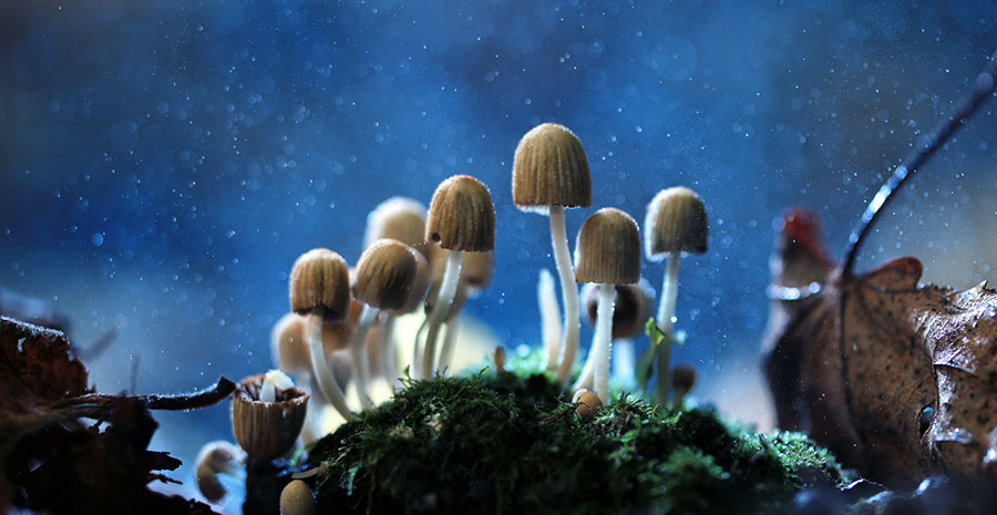 Life Sciences Firm Partners with University to Develop Biosynthetic Psilocybin