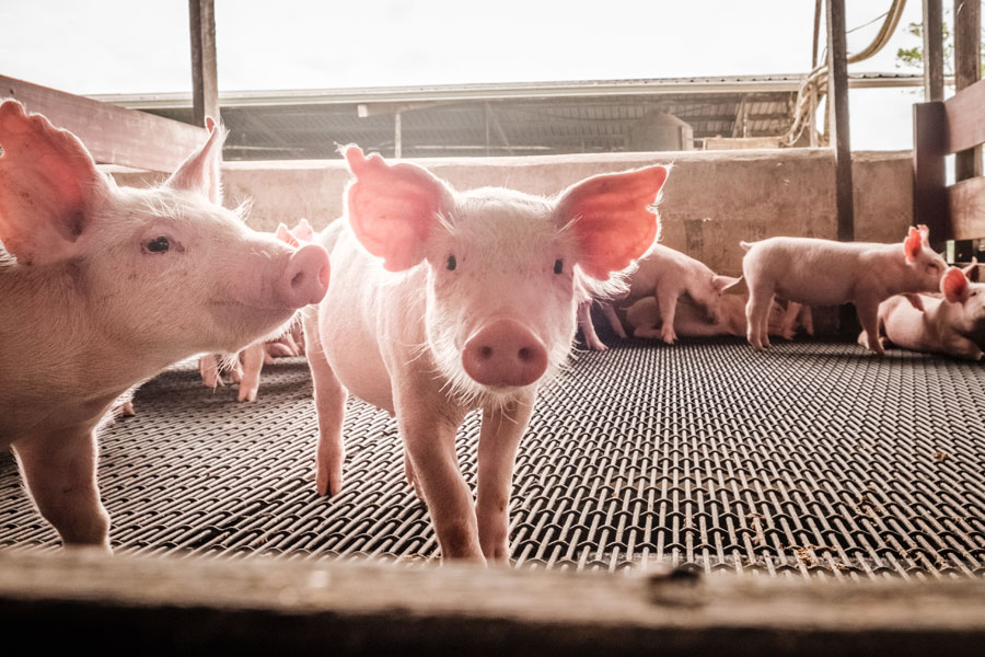 Technical Analyst: As Antibiotic Resistance Rises, So May the Stock of This Livestock Feed Company